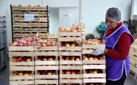 A woman is stacking apple boxes