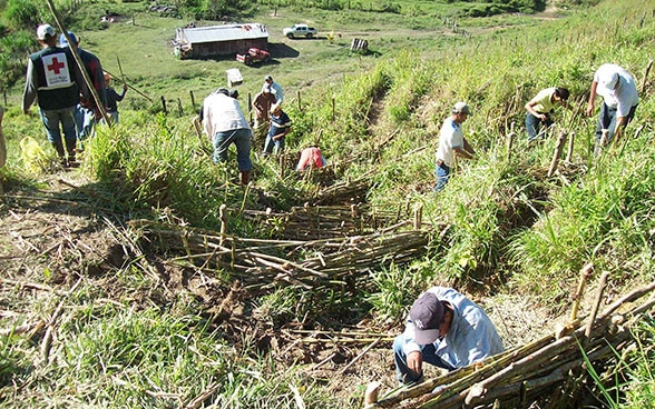 Around 10 villagers building water-retention walls out of bamboo in a sloping field.
