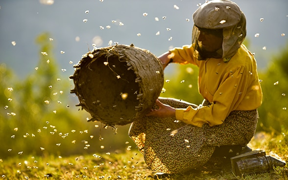 A beekeeper holds a beehive in her hand from which wild bees fly out.