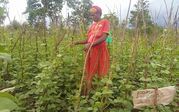 A female smallholder farmer in Burundi stands between her rows of beanstalks.