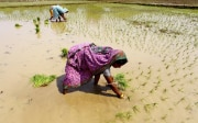 Two women planting rice in a paddy.