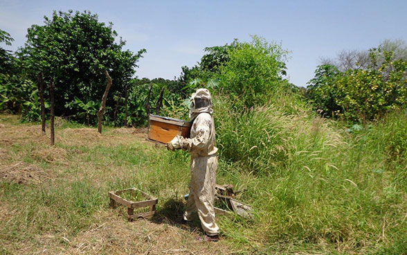 A beekeeper in Darfur at work.