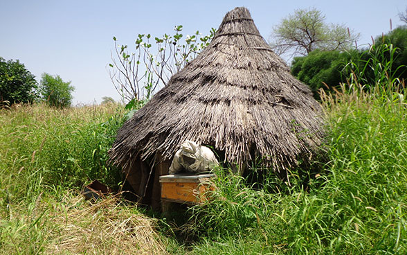 A beekeeper in Darfur in Sudan, coming out of an apiary.