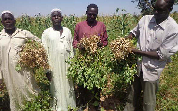 Peanut farmers in Darfur showing off their harvest.